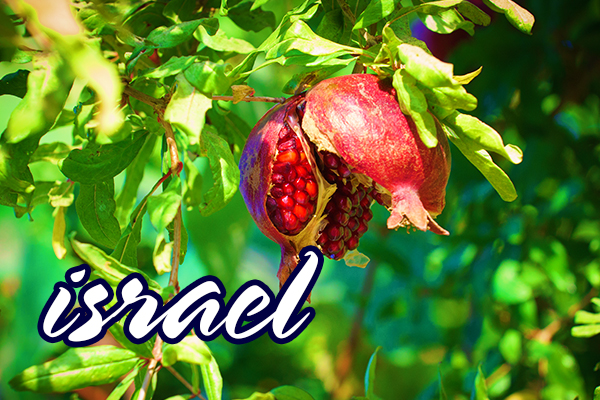 Pelerinaj Israel 7 zile